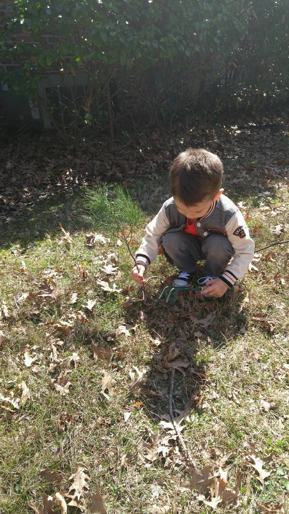 Boy Planting Sappling
